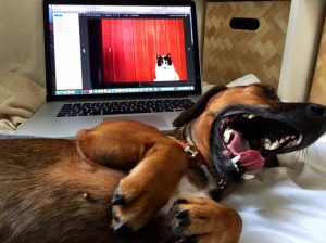 blog-1_frida-yawn